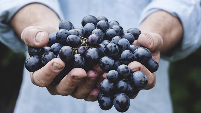 La Festa dell'uva a Casa Serena