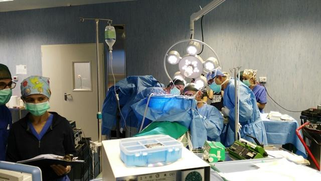Ospedale didattico veterinario sassari