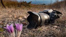 Fotocamere digitali reflex e compatte