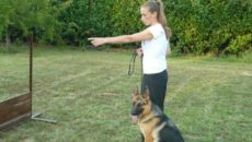 Come diventare addestratore di cani