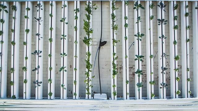 Vertical Farm coltivazione in verticale